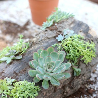 Add rustic charm to your outdoor table with this DIY succulent centerpiece. Plus, get even more creative ideas and tips for sprucing up your outdoor space with plants and flowers.