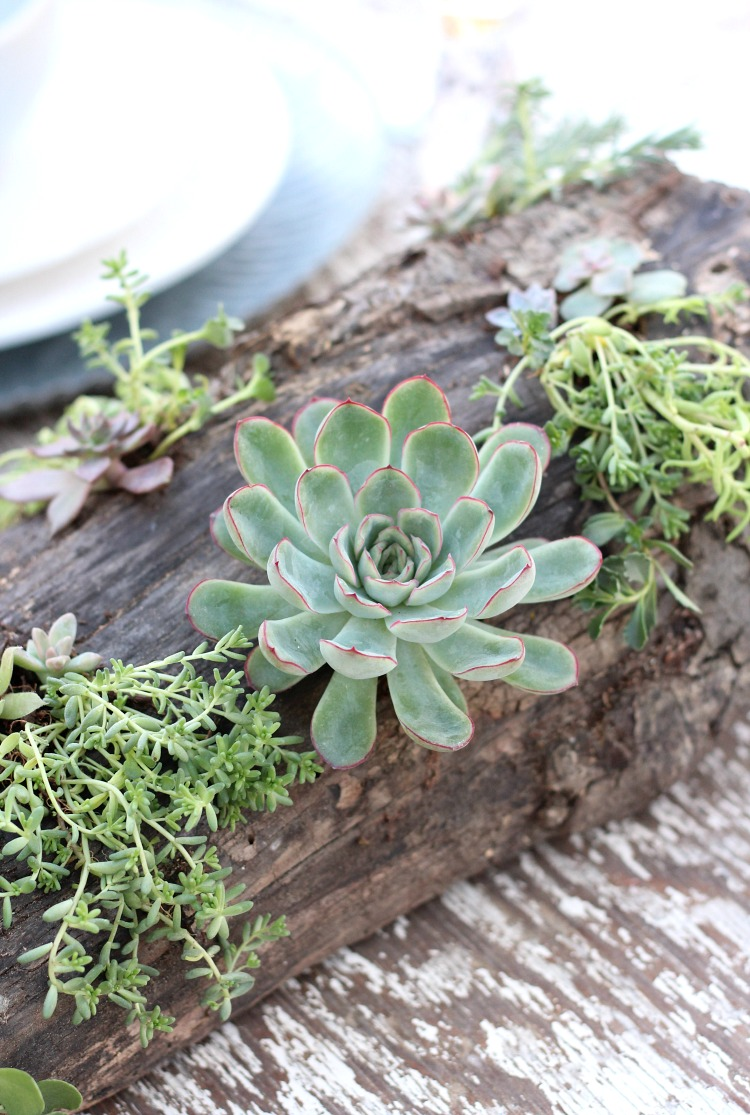 DIY Succulent Centerpiece - Add rustic charm to your outdoor table. Lovely for summer parties or weddings.