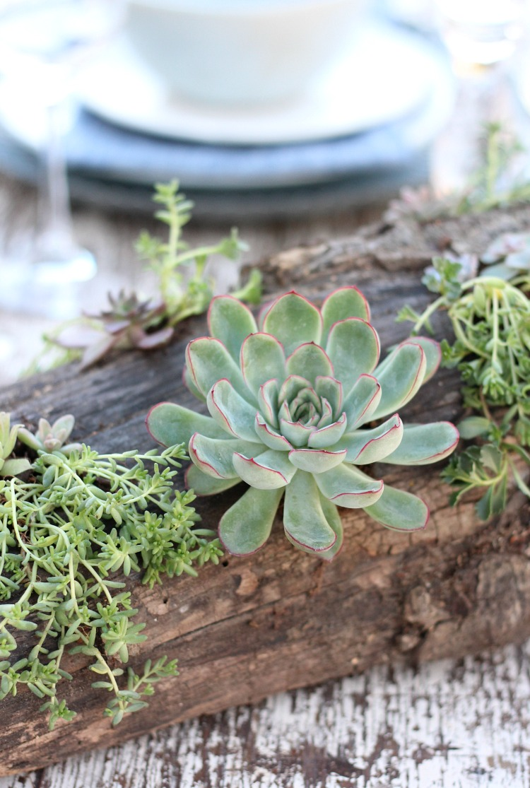 Add rustic charm to your outdoor table with this DIY log and succulent centerpiece. Plus, get even more creative ideas and tips for sprucing up your outdoor space with plants and flowers.