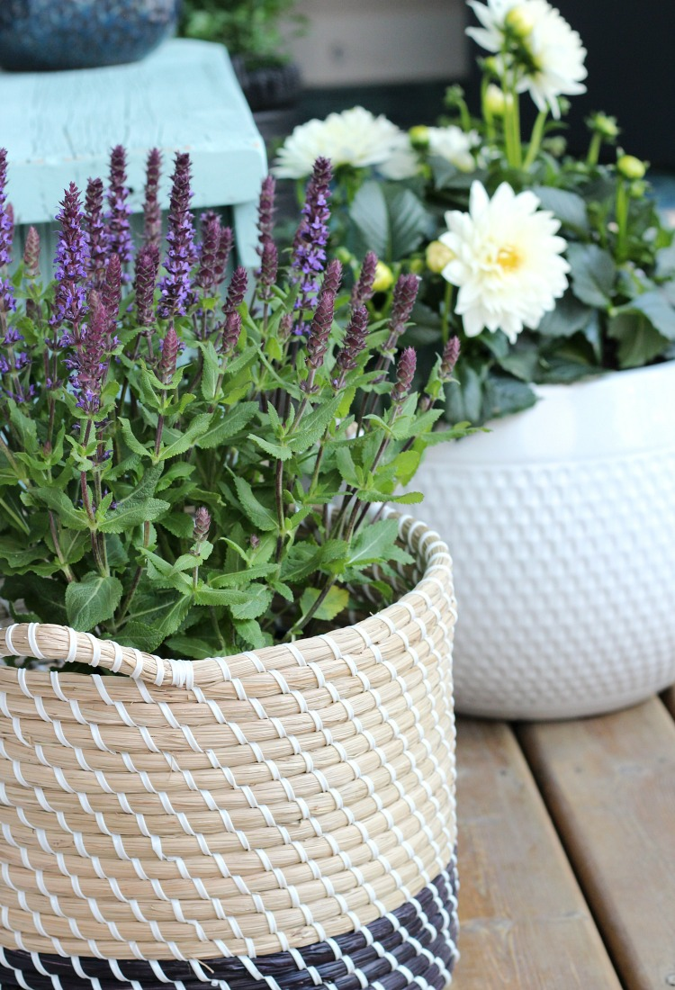 Woven Basket Planter with Salvia - Front Porch Decorating Ideas
