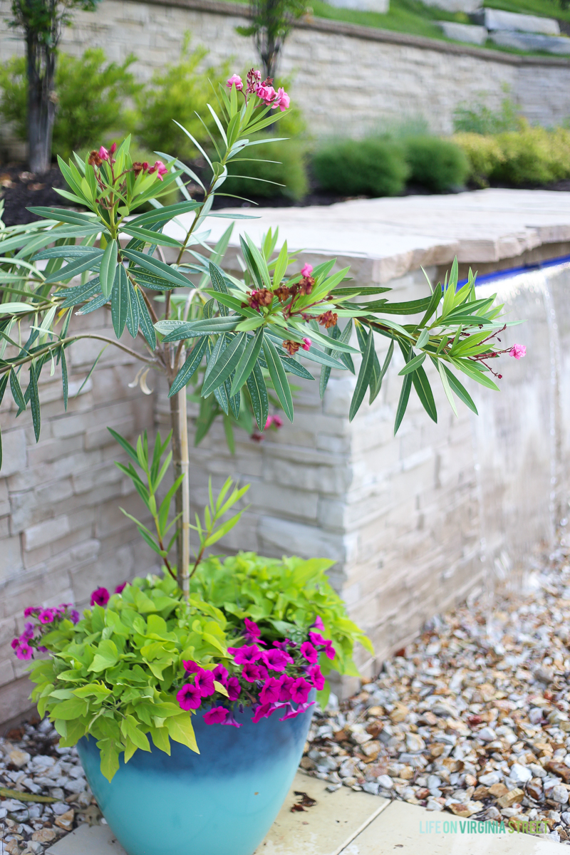 How to Create the Perfect Summer Planters - Life on Virginia Street #OutdoorExtravaganza