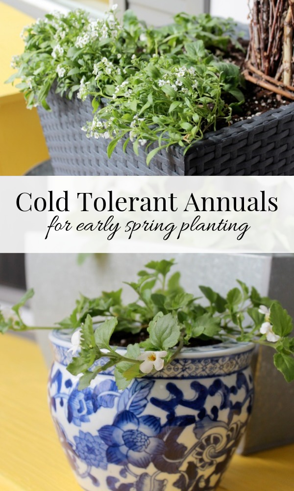 A List of Cold Tolerant Plants for Early Spring Planting - Satori Design for Living
