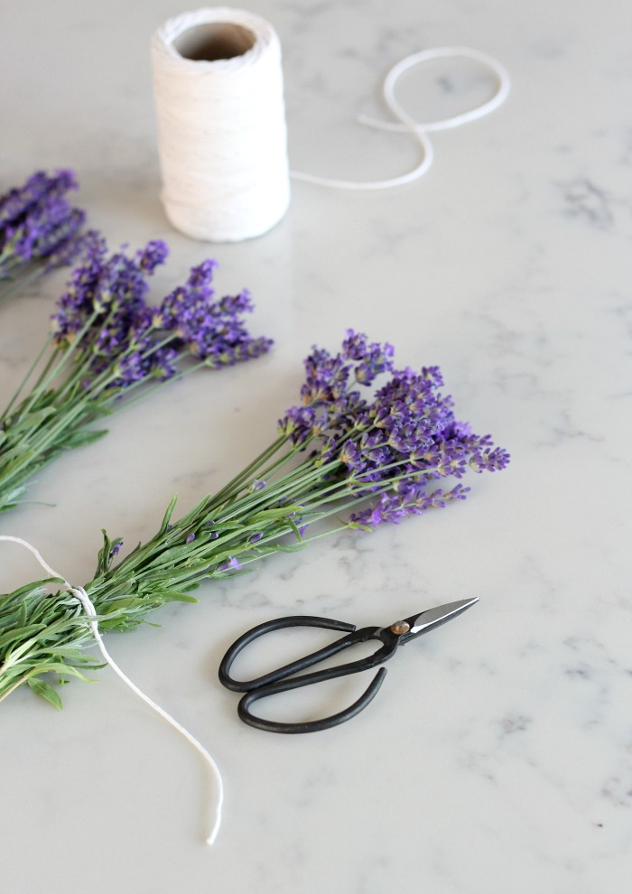 Bundles of English Lavender Tied with White String