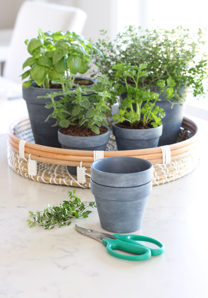 Indoor Herb Garden Using Small Plant Pots and Tray