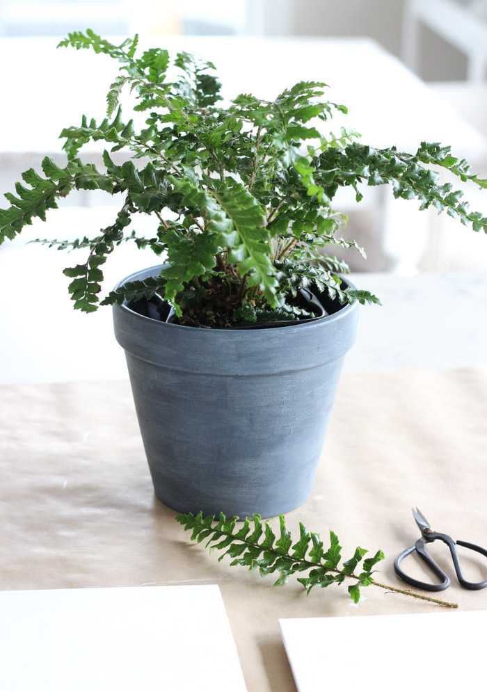 Tassel Fern in Faux Concrete Pot